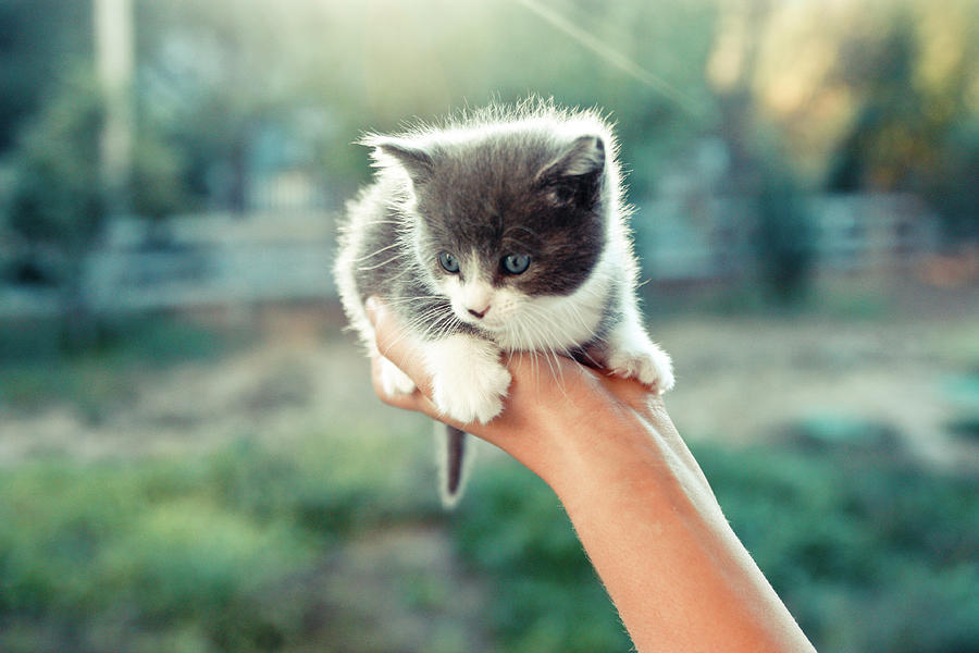 Kitten In Hand, 2010 Photograph