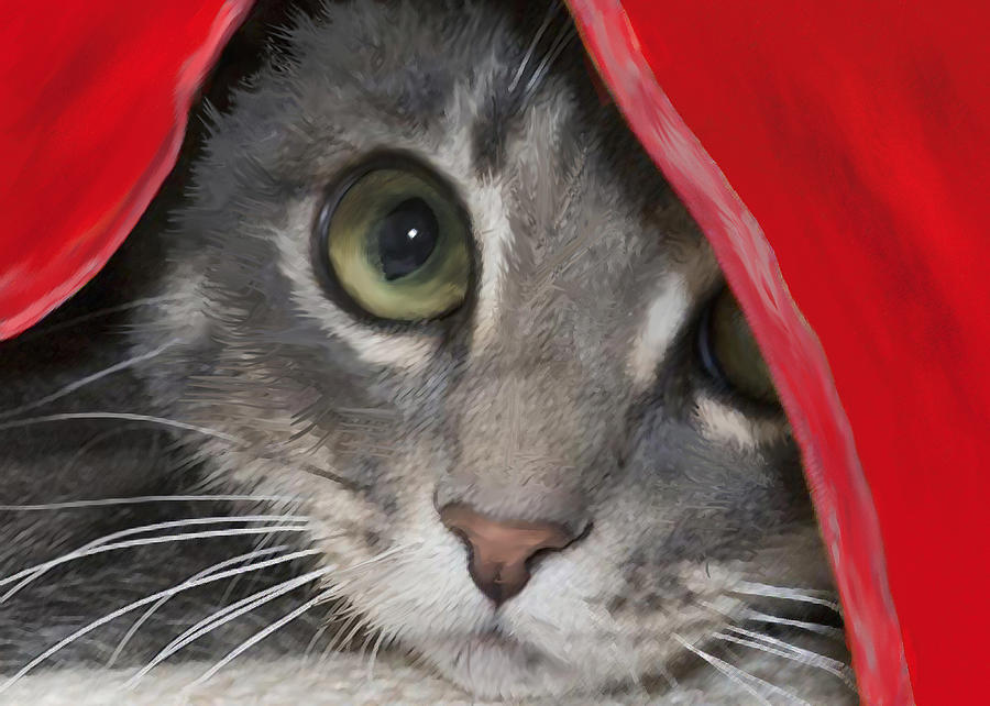 Kitten In Red Blanket Digital Art  - Kitten In Red Blanket Fine Art Print