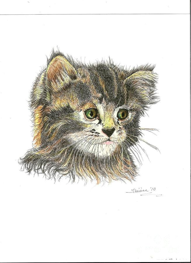 Kitten Drawing  - Kitten Fine Art Print