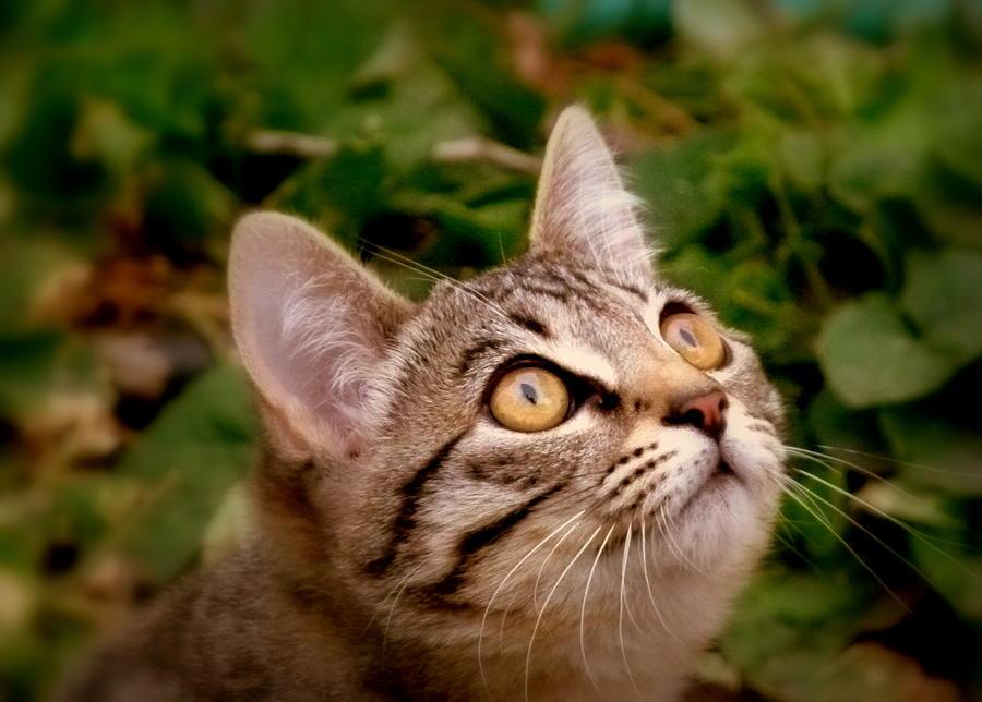 Kitty Eyes 2 Photograph