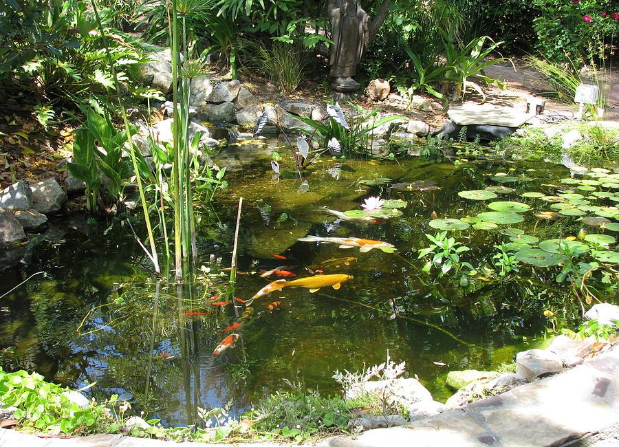 Koi Pond Photograph By Carol Nistle