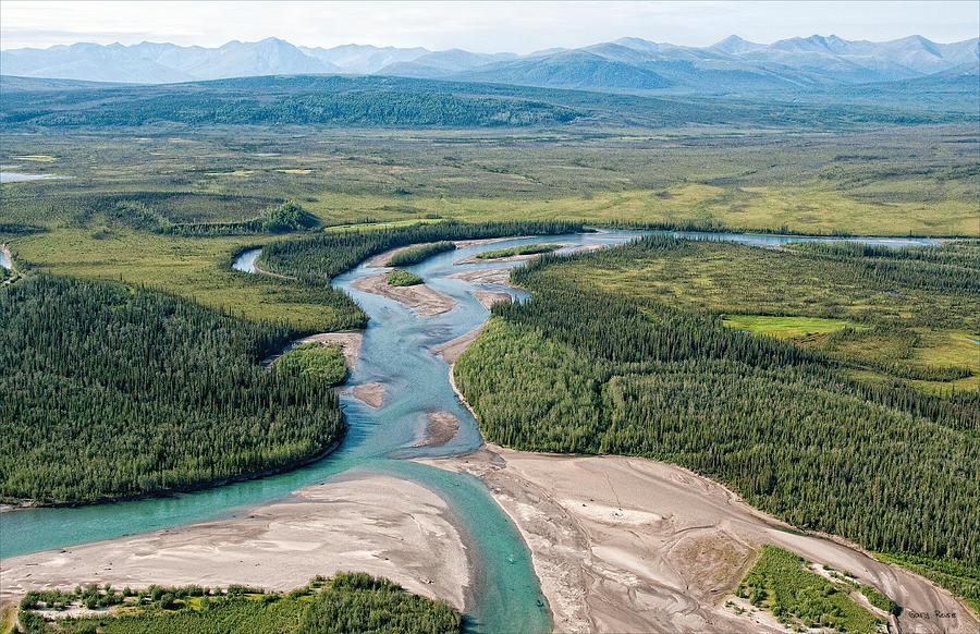 koyukuk chat Age hatched in 2011 sex male location 40 mi w of fairbanks, minto  lakes, yukon-koyukuk census area, alaska, usa.