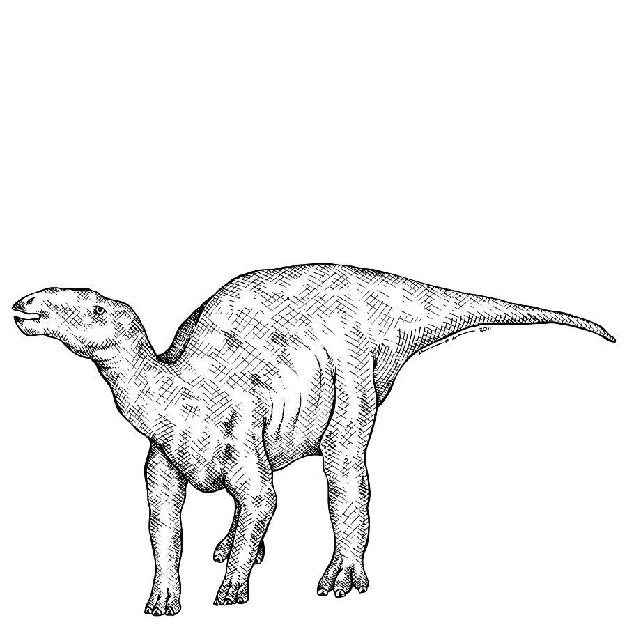 Cartoon Drawing - Kritosaurus - Dinosaur by Karl Addison