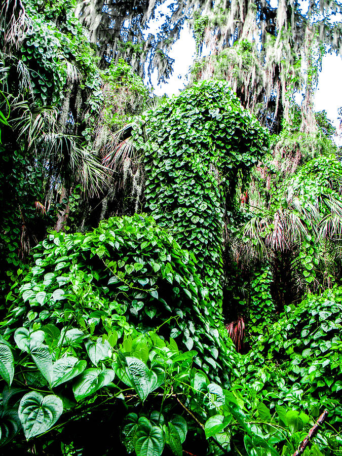 Kudzu Photograph - Kudzu Creature by Christy Usilton