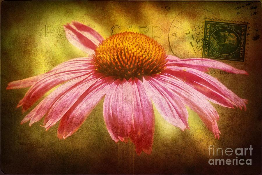La Fleur Photograph