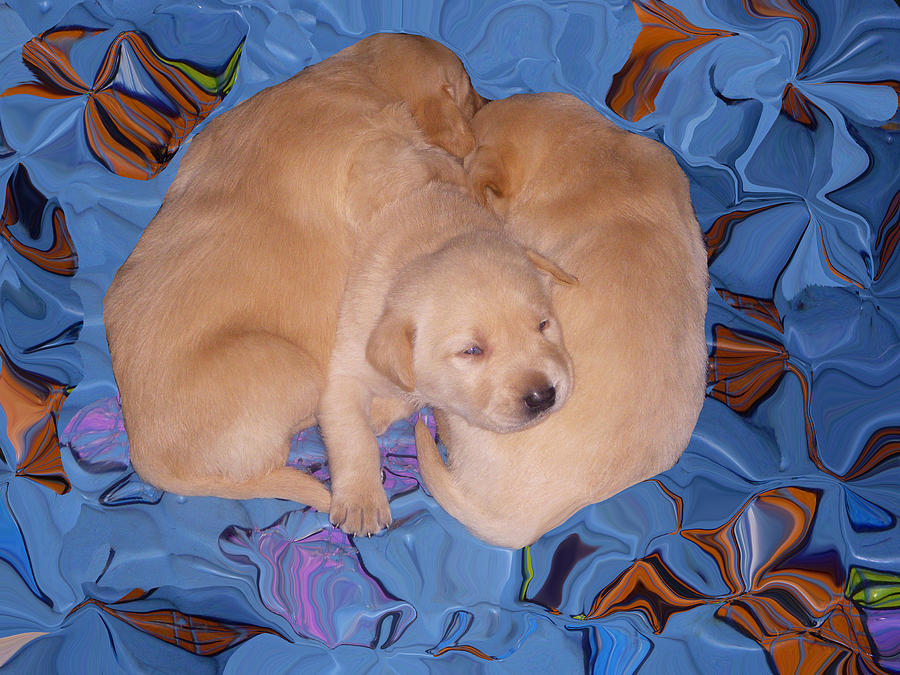 Puppy Photograph - Lab Pups 2 by Aimee L Maher Photography and Art Visit ALMGallerydotcom