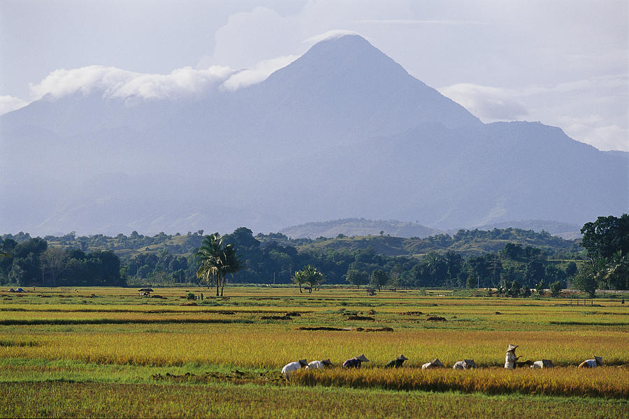 Laborers In A Rice Field Work In The Shadow Of A Volcano. Photograph - Laborers In A Rice Field Work by Steve Raymer