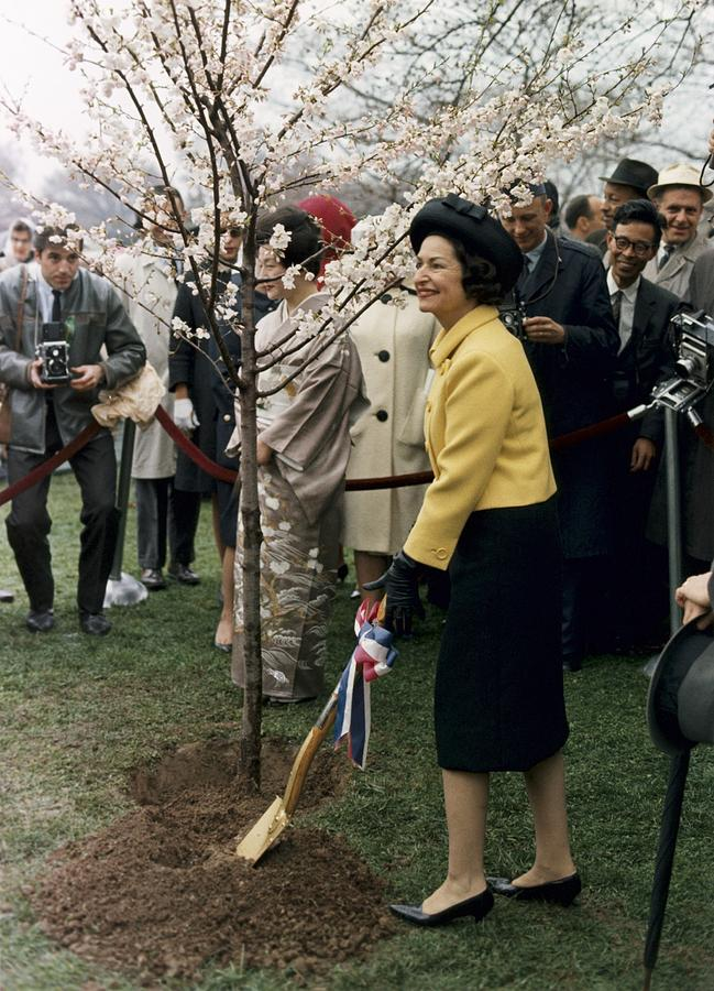 Lady Bird Johnson Planting A Tree Photograph