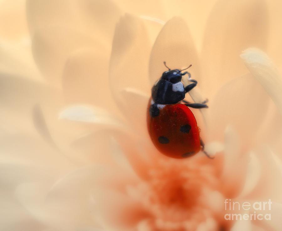 Ladybird Photograph - Ladybird by Lee-Anne Rafferty-Evans