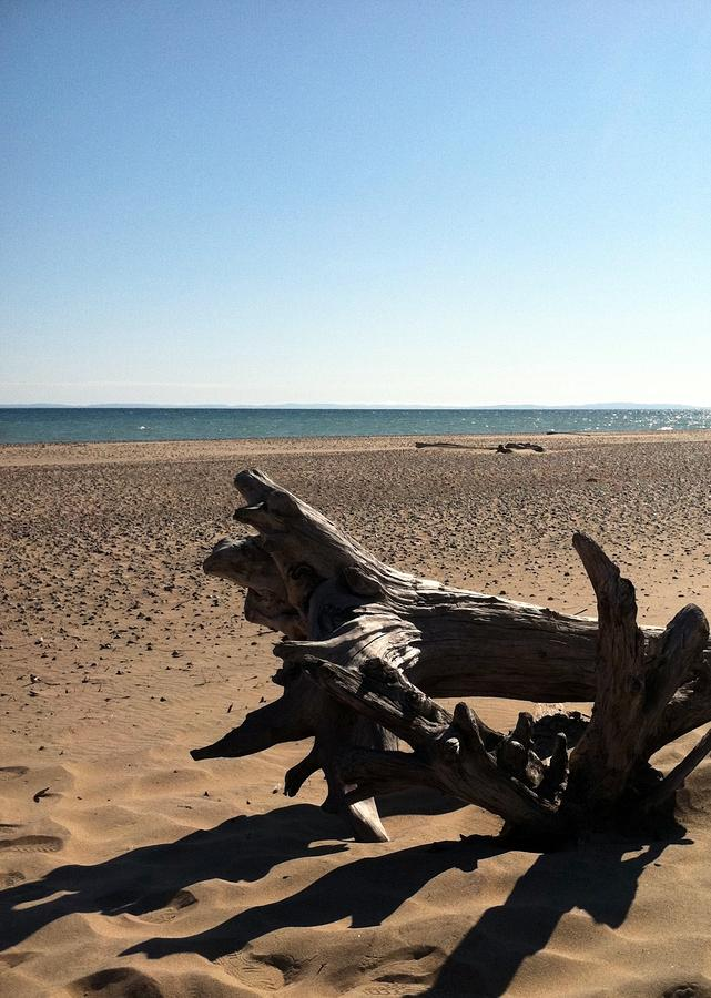 Lake Superior Driftwood Photograph  - Lake Superior Driftwood Fine Art Print