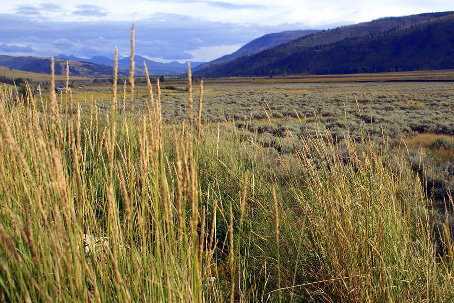Lamar Valley 2 Photograph