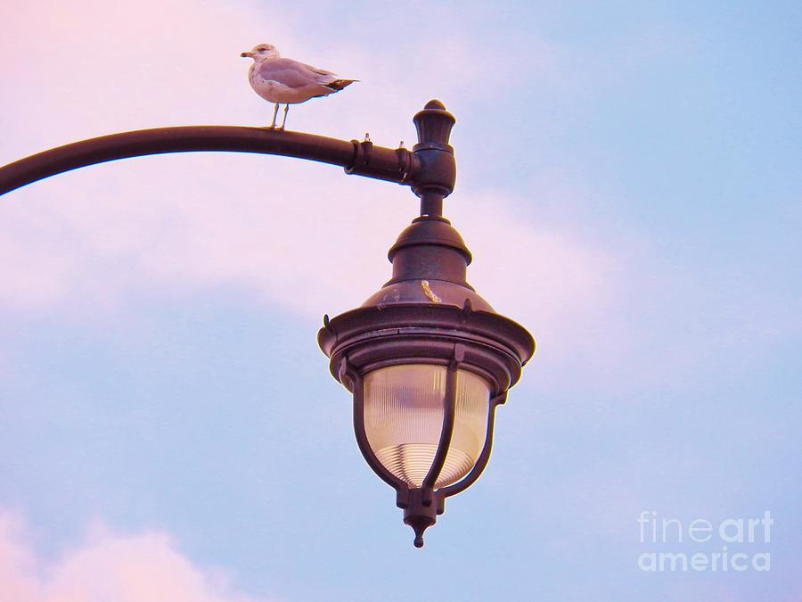 Lampost Photograph - Lampost Gull   Two by Judy Via-Wolff