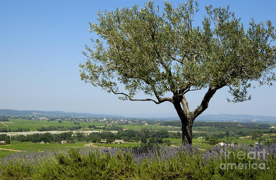 Landscape Of Provence. France Photograph  - Landscape Of Provence. France Fine Art Print