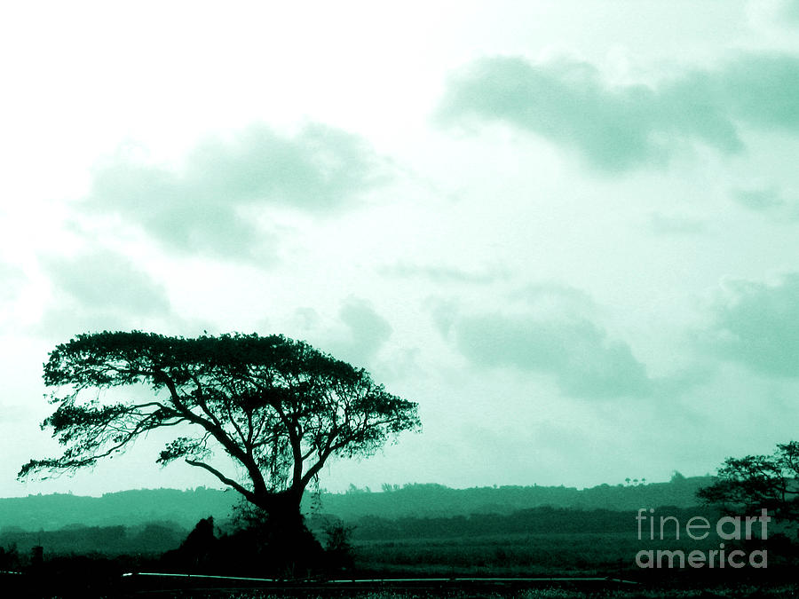 Landscape With Tree Photograph  - Landscape With Tree Fine Art Print