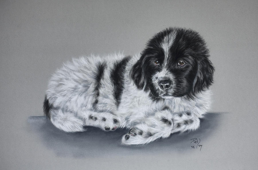 Landseer Pup Pastel