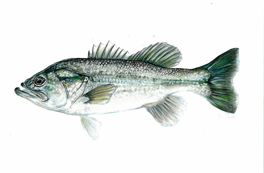 Large Mouth Bass Mixed Media  - Large Mouth Bass Fine Art Print