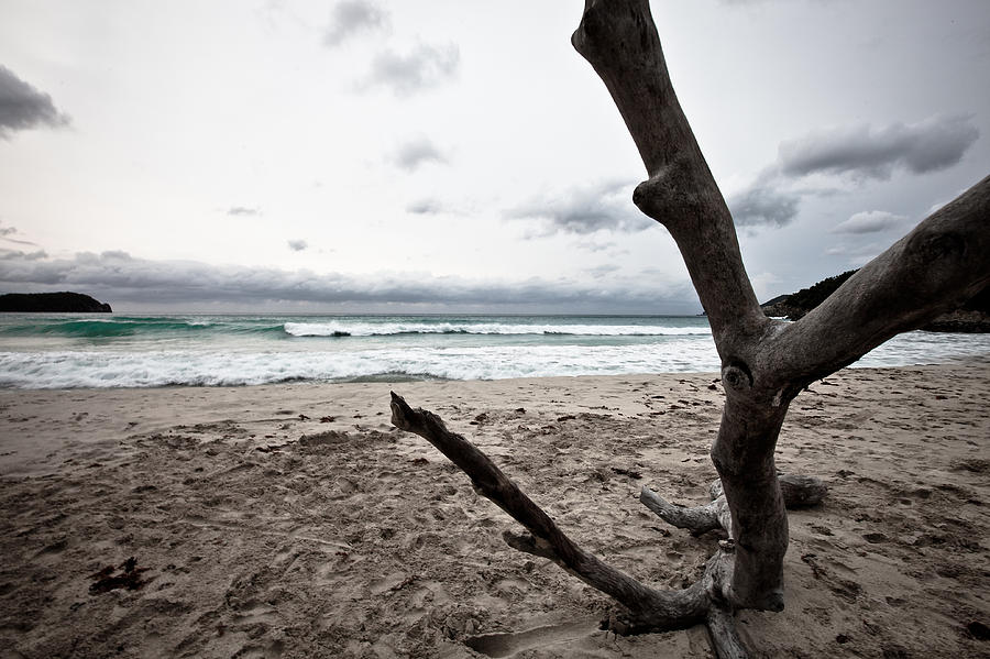 Large Piece Of Driftwood On A Beach On An Overcast Day Photograph