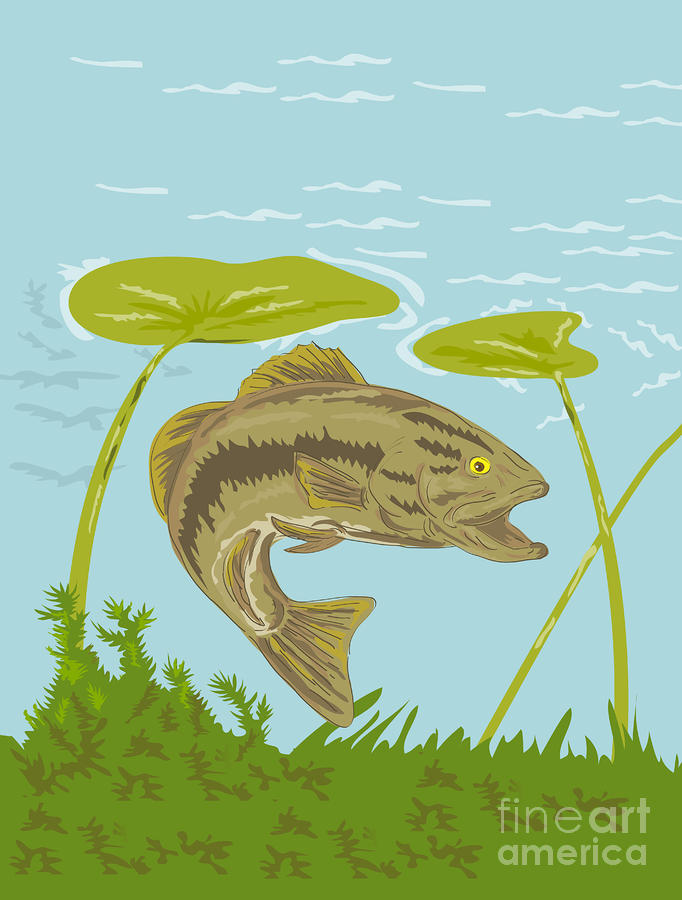 Largemouth Bass Fish Swimming Underwater  Digital Art  - Largemouth Bass Fish Swimming Underwater  Fine Art Print