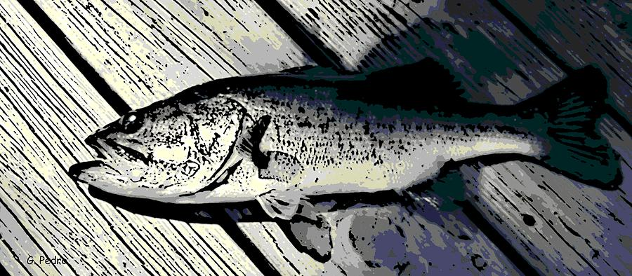 Largemouth Bass Photograph  - Largemouth Bass Fine Art Print