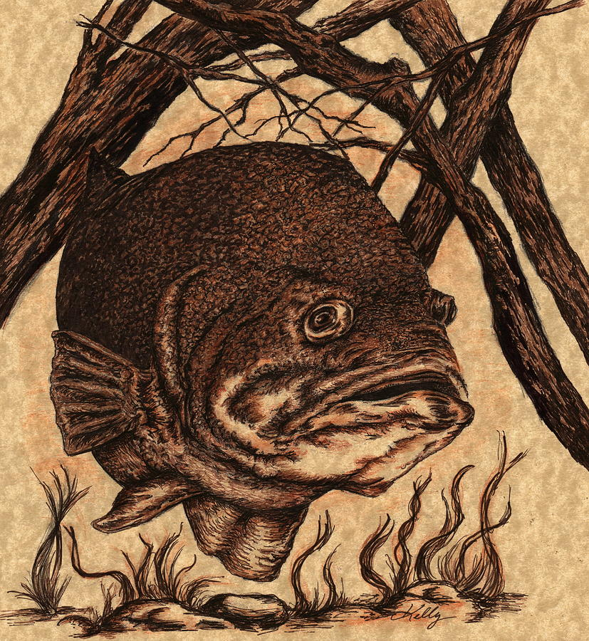 Bass Drawing - Largemouth Bass by Kathleen Kelly Thompson