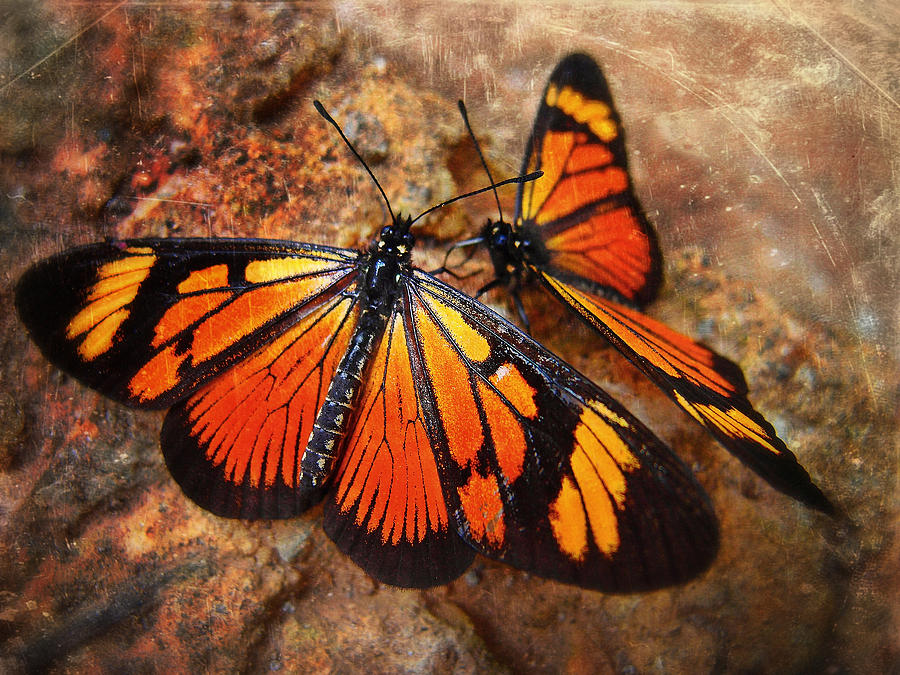 Las Mariposas Photograph