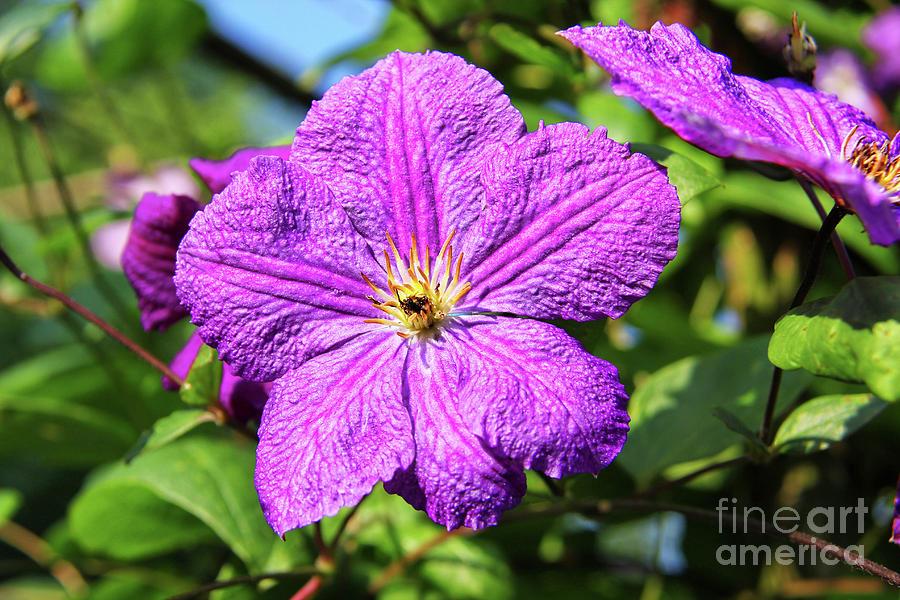 Last Summer Bloom Photograph - Last Summer Bloom by Mariola Bitner