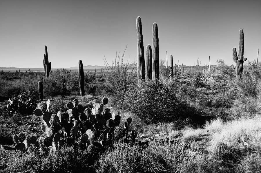 Late Winter Desert Photograph