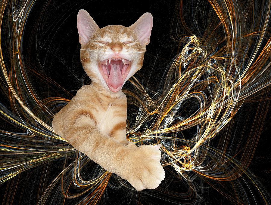Laughing Rascal Photograph  - Laughing Rascal Fine Art Print