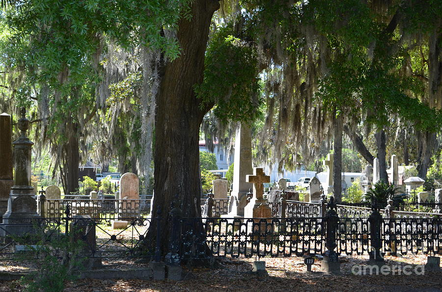Laurel Photograph - Laurel Grove Cemetery - Savannah Georgia by Randy Edwards