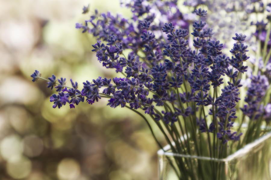 Lavender Bokeh Photograph