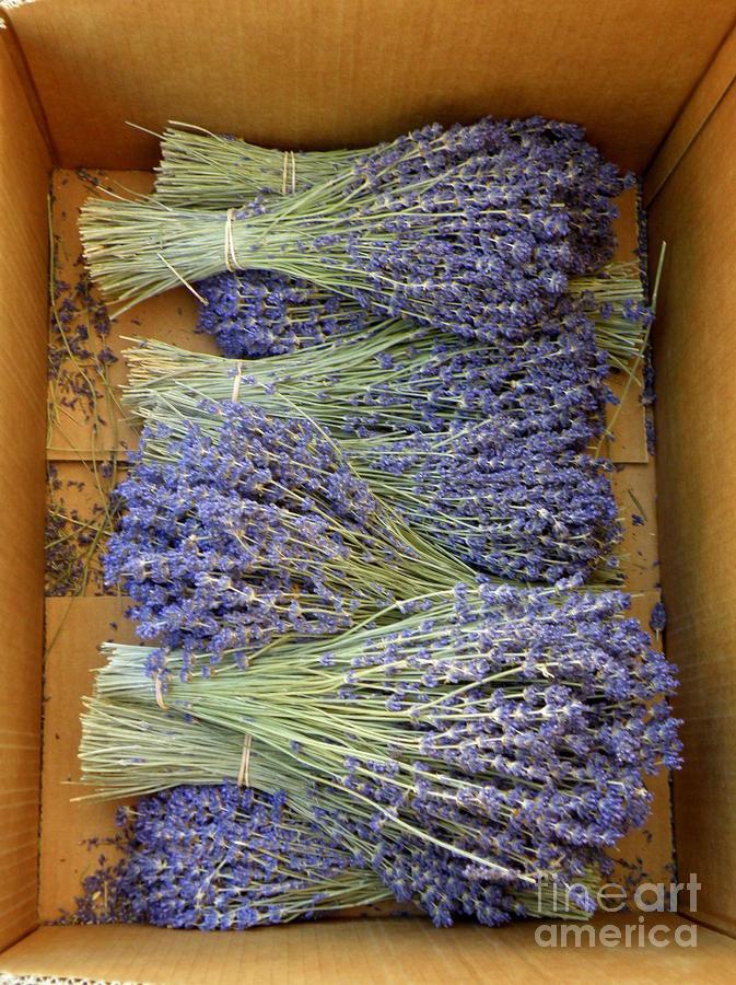 Lavender Bundles Photograph