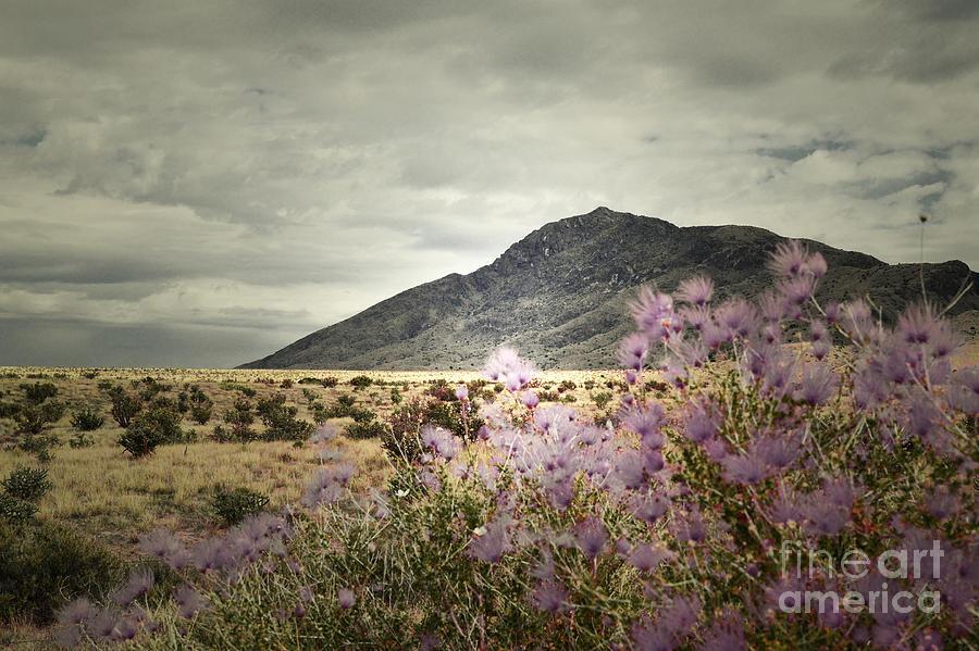Lavender Wild Photograph