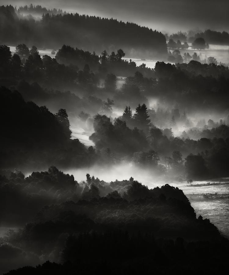 Forest Photograph - Layers by Jaromir Hron