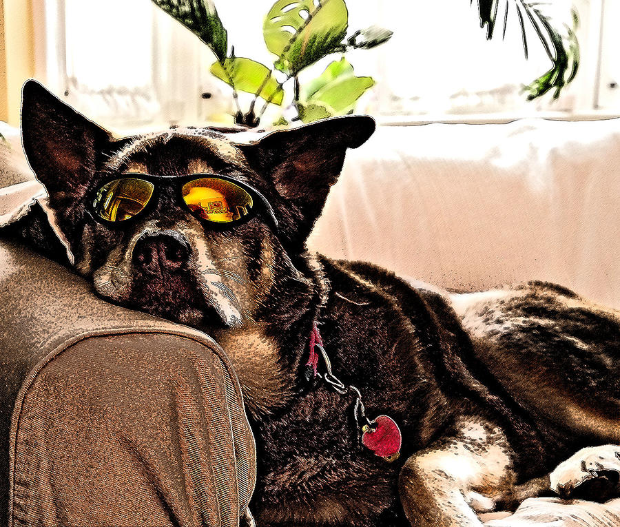 Lazy Dog Photograph  - Lazy Dog Fine Art Print