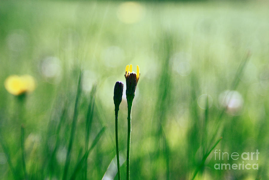 Green Photograph - Le Centre De L Attention - Green S0101 by Variance Collections