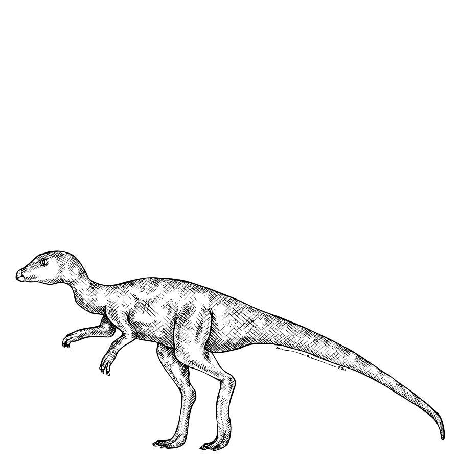 Leaellynasaura - Dinosaur Drawing