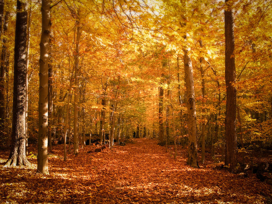 Leaf Covered Pathway In A Golden Forest Photograph  - Leaf Covered Pathway In A Golden Forest Fine Art Print