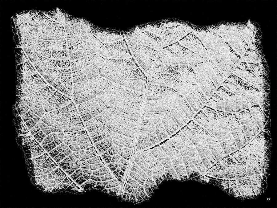 Leaf Design- Black And White Digital Art  - Leaf Design- Black And White Fine Art Print