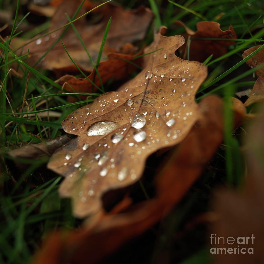 Leaf In Autumn. Photograph