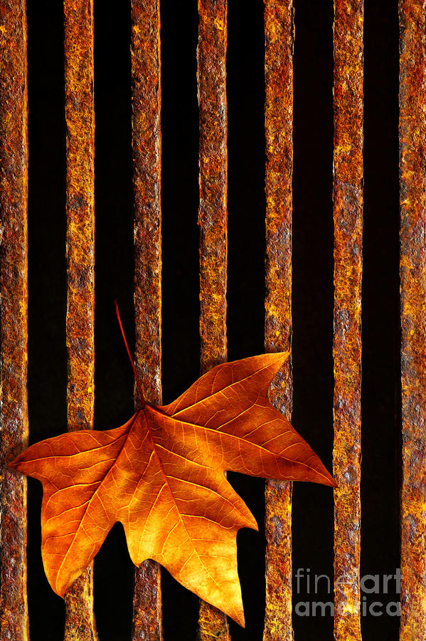 Leaf In Drain Photograph  - Leaf In Drain Fine Art Print