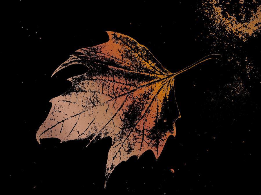 Leaf On Bricks Digital Art