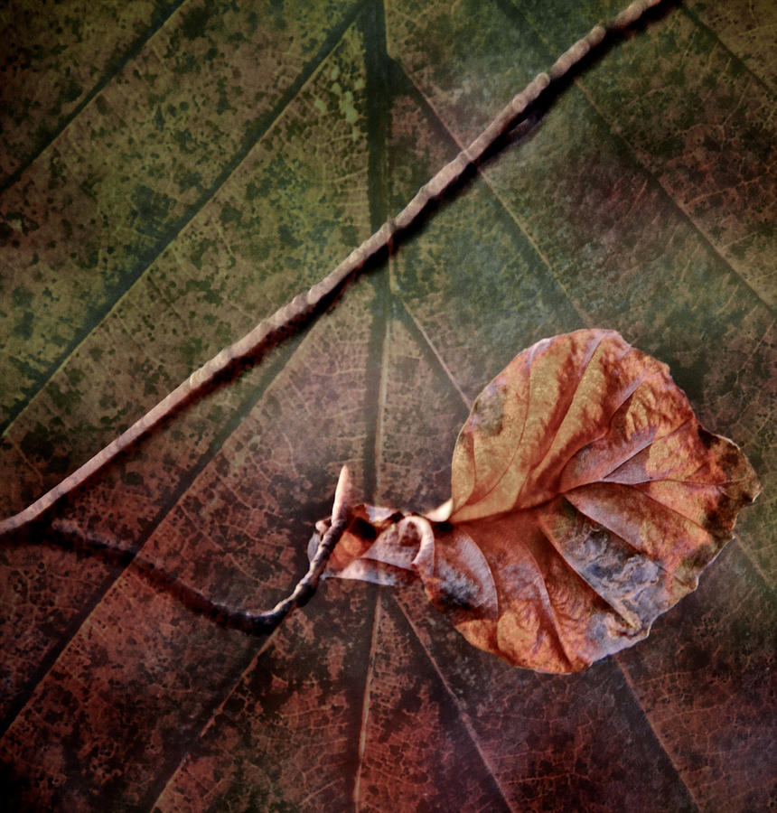 Leaf On Leaf Photograph