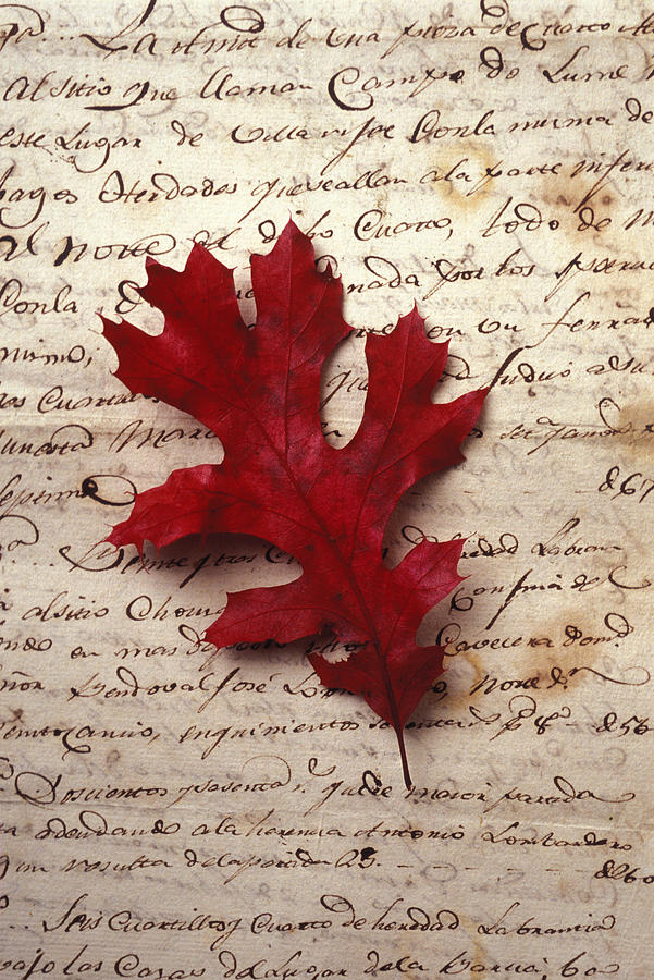 Leaf On Letter Photograph  - Leaf On Letter Fine Art Print