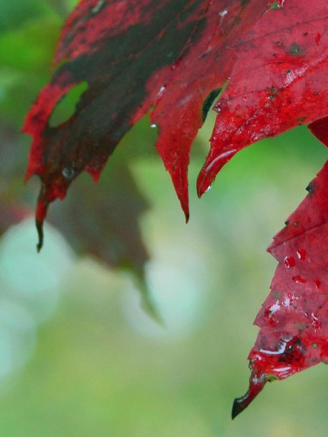 Leaf Shadows Photograph
