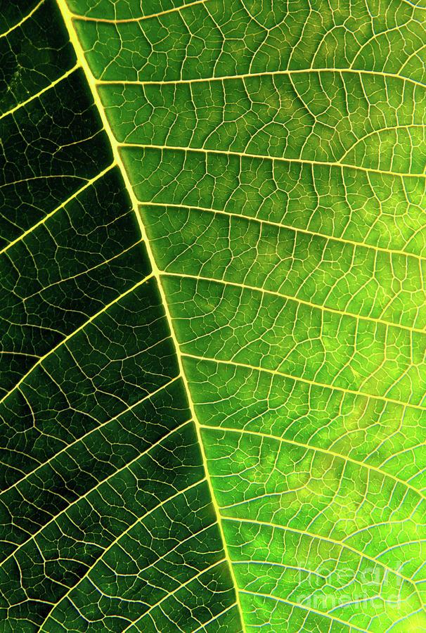 Leaf Texture Photograph