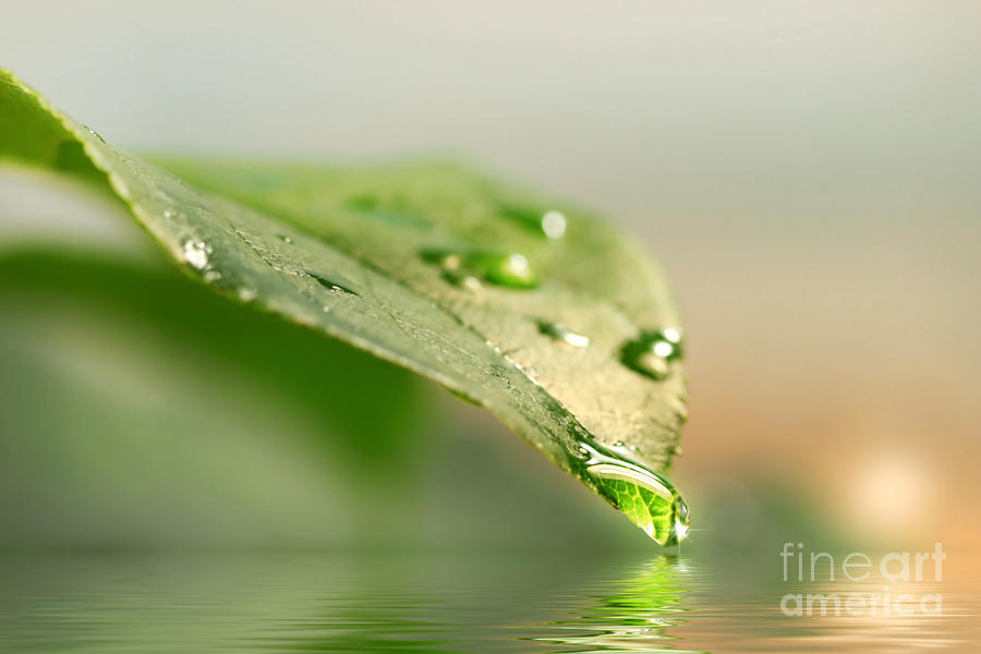 Leaf With Water Droplets Photograph