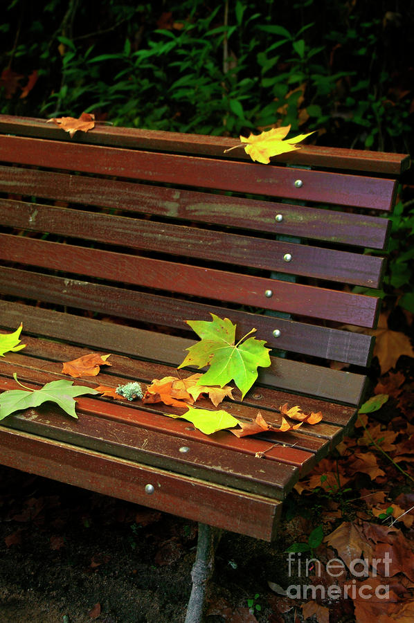 Leafs In Bench Photograph