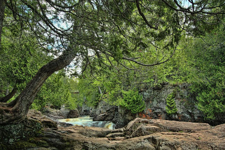 Leaning Cedar At Cascade River Photograph