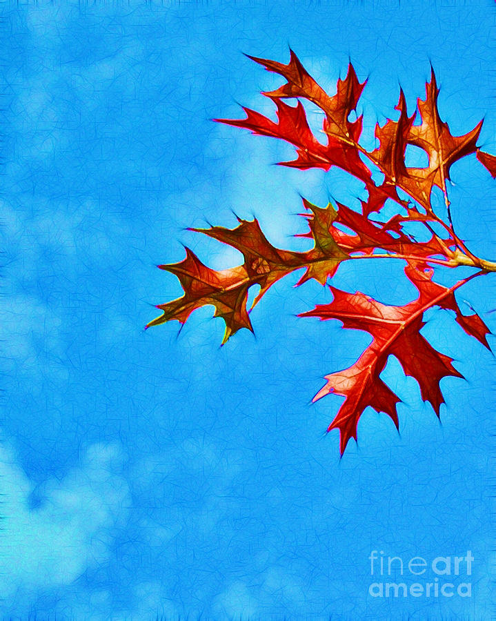 Autumn Photograph - Leaves Against The Sky by Judi Bagwell