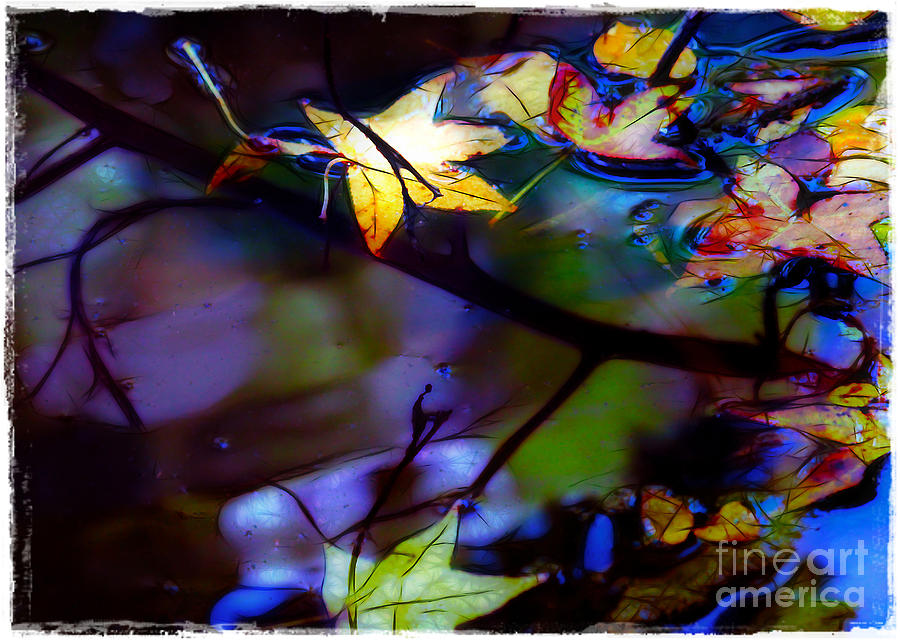 Leaves And Reflections Photograph  - Leaves And Reflections Fine Art Print
